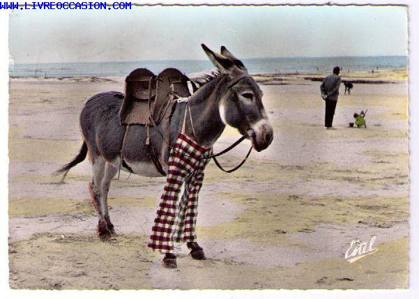 ile de re ane en culotte donkey wearing trousers carte postale charente maritime ile de r. Black Bedroom Furniture Sets. Home Design Ideas